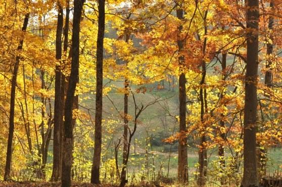 woods fall