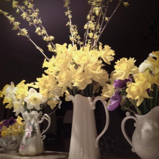 1-daffodil