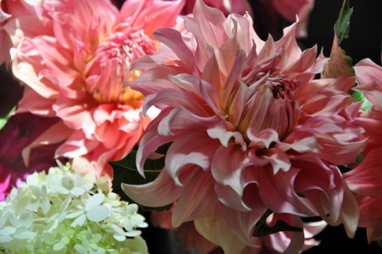 dahlias always delight