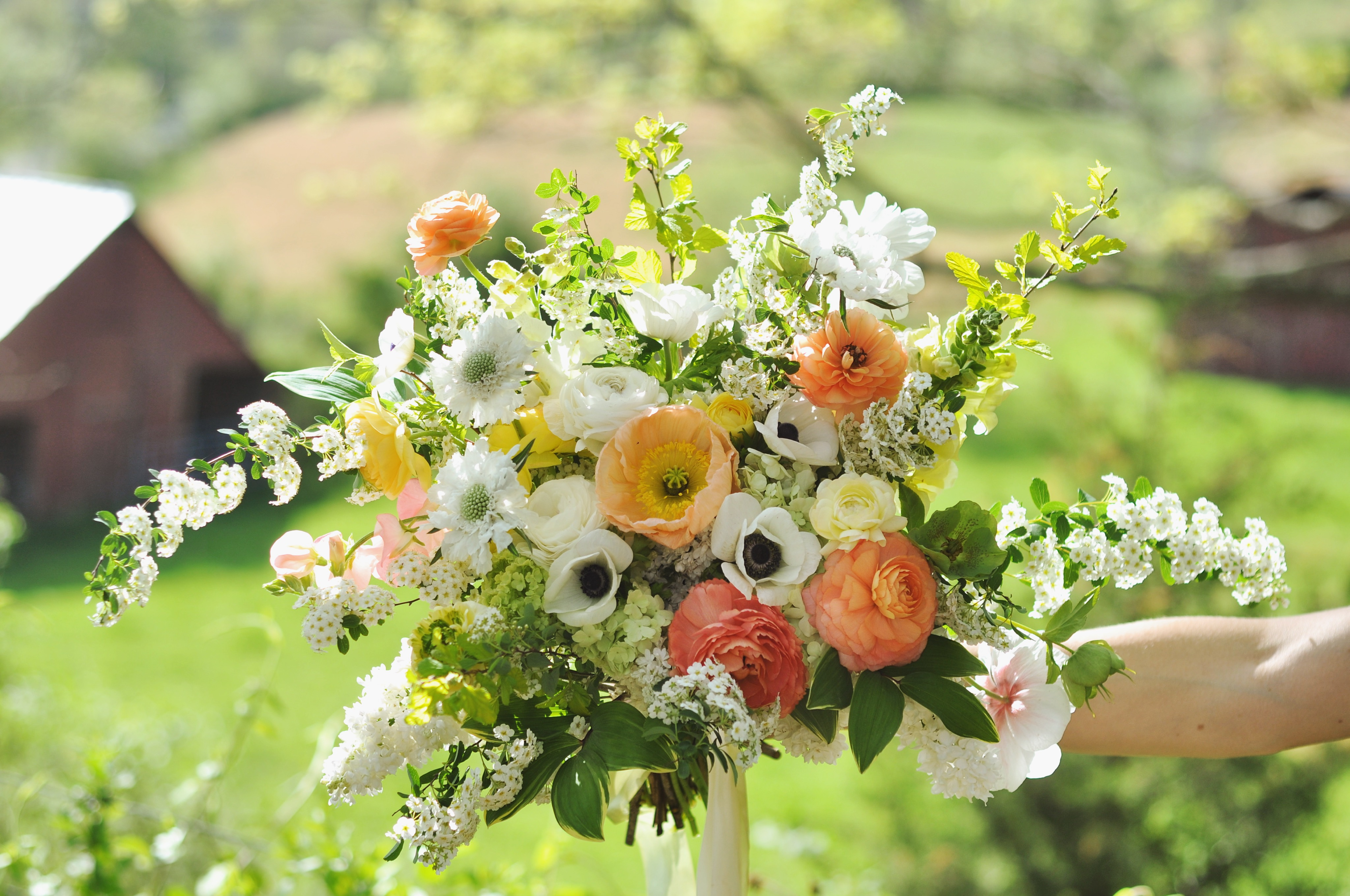 Growing Spring And Early Summer Flowers Online Growing Class Aunt